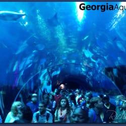 Big Tank Underwater Tunnel