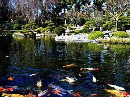 Photos For Earl Burns Miller Japanese Garden Yelp