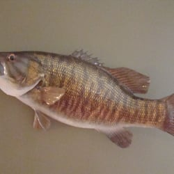 Murphy s taxidermy fishing howell mi yelp for Fish taxidermy near me