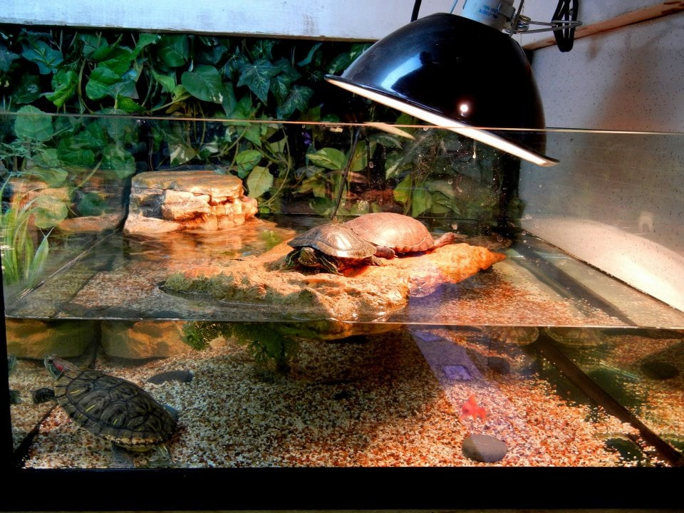 What a cool turtle tank! Yelp