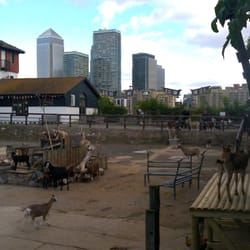Goats and Canary Wharf.