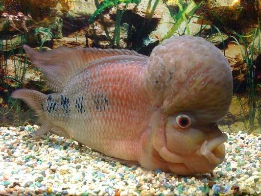 fish brain - photo #23