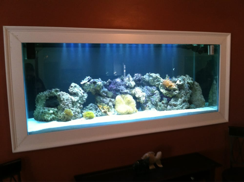 Custom Built In Wall Fish Tank Yelp
