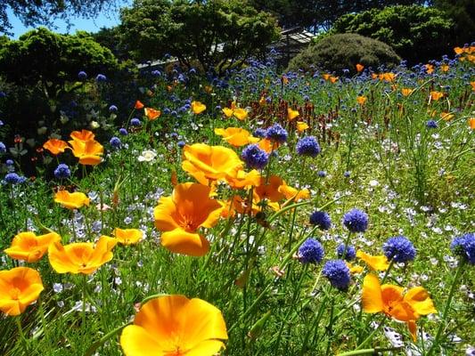 - Mendocino coast botanical gardens ...