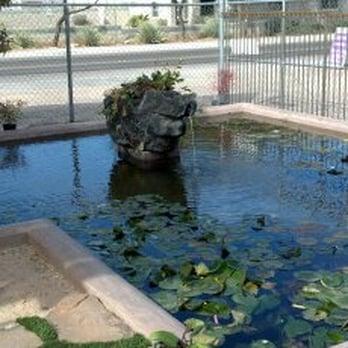 Tucson koi water gardens catalina foothills yelp for Custom koi ponds