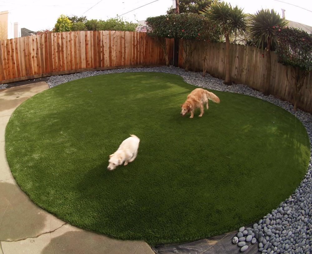 Best Artificial Grass For Backyard : Artificial turf for a dog run area installed in a kidney shape in a