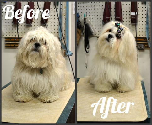 dog grooming before and after photo yelp