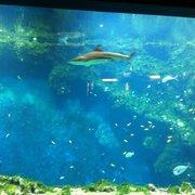 tarif entree aquarium lyon