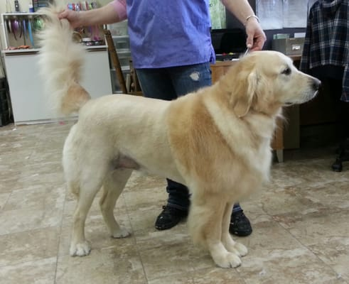 Dog Grooming in Houston  Terminology and Blade Uses