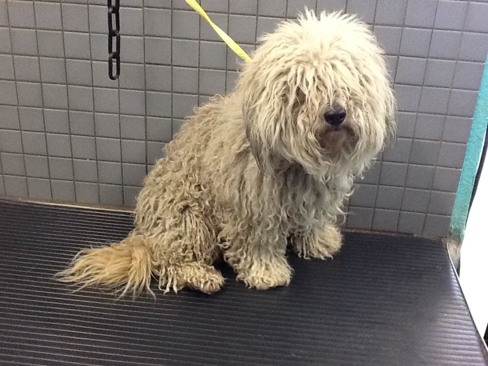 Matted Dog Before Yelp