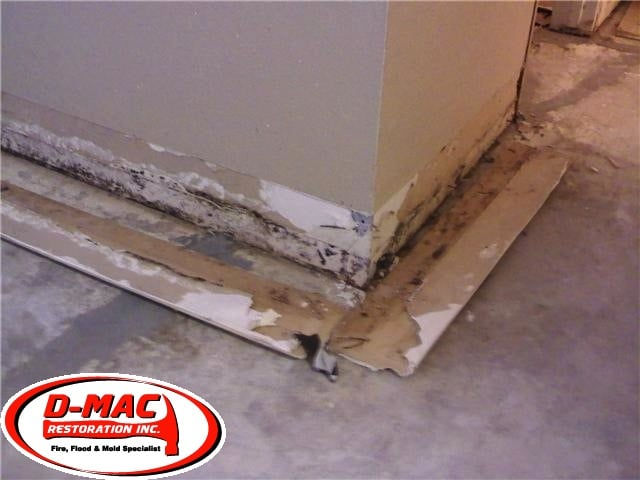 Typical Mold Growing Behind Baseboards Wasn T Detectible