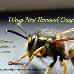Removing wasps in Croydon
