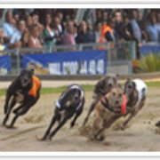 Norfolk Greyhound Racing Co, Great Yarmouth, Norfolk