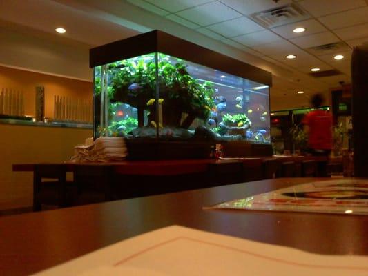 Pretty fish tank :) Yelp