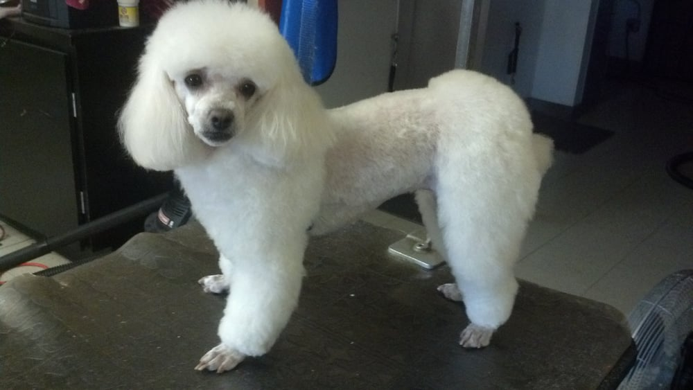 Dog Grooming In The Bronx