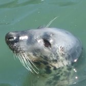 Howth seal