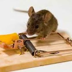 Pest Control Kingston Upon Thames, London