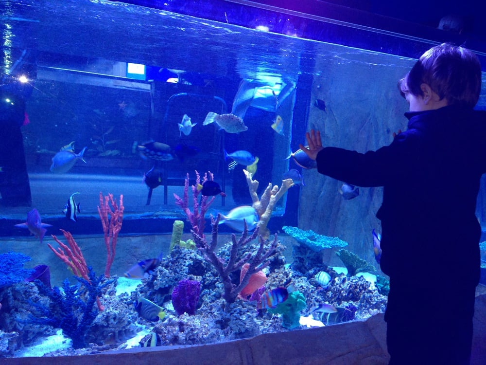 Aquarium Yelp Photos For Manhattan Aquariums Yelp 2017