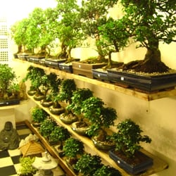 Bonsai-Garten, Hamburg