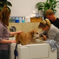 Bow wow bath house pet groomers lake elsinore ca yelp for A family pet salon