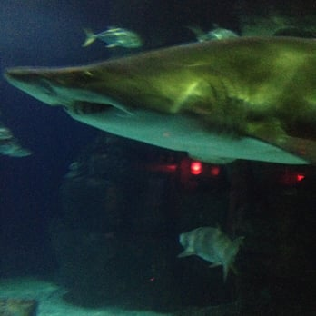 Overall The Aquarium Was Fun There Were Turtles Sharks