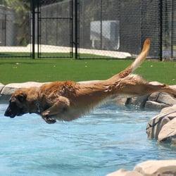 Snug Pet Resort San Diego Ca Yelp