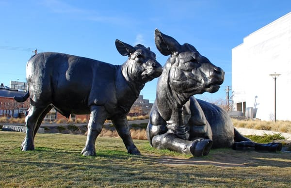 cow statues in Denver