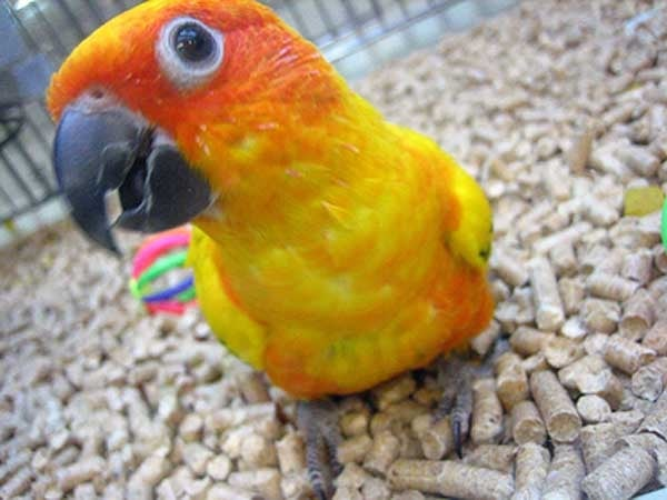 Pictures Of Petsmart Baby Birds Rock Cafe